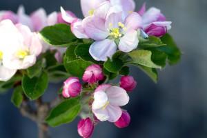 Плодовый сад фото описание смотреть