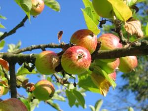 Овощи и фрукты фото, описание, смотреть