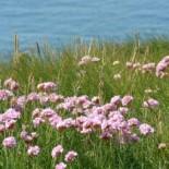 Какие почвопокровные многолетники выбрать для создания цветочного ковра в саду?