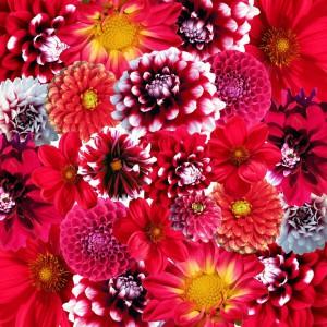 autumn-58882_960_720