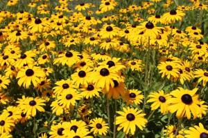 посадка цветов под зиму фото, описание, смотреть