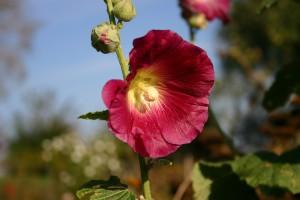 blossom-1733629_960_720