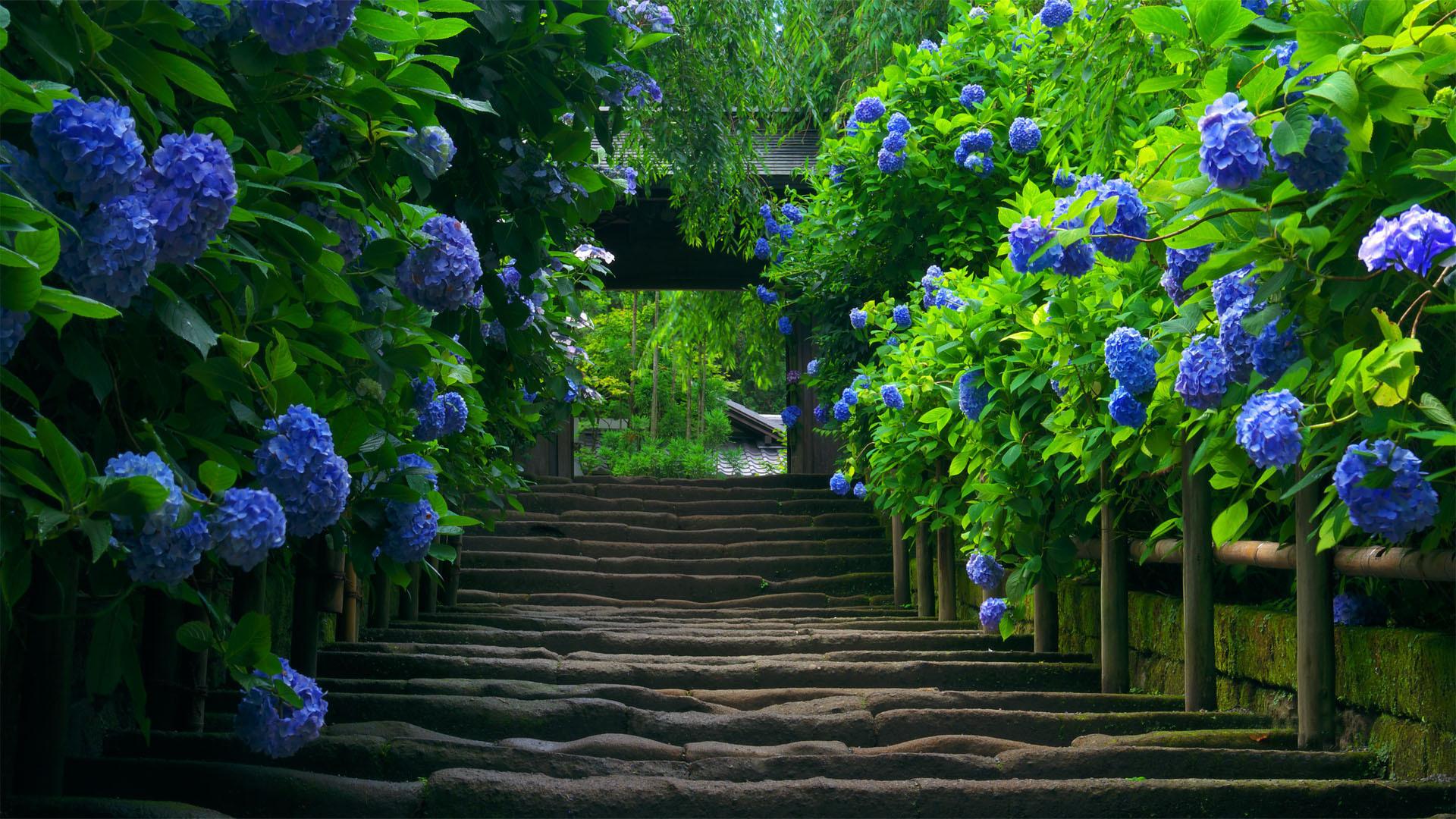 Как создать сад цвета моря… сад в