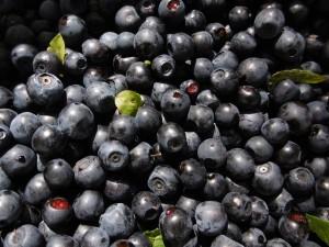 blueberries-2673880_1280