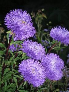 botanical-garden-205119_640