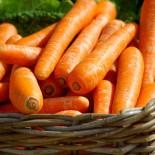 Все о выращивании моркови…