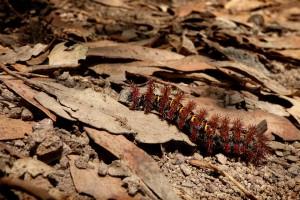 caterpillar-1793509_960_720
