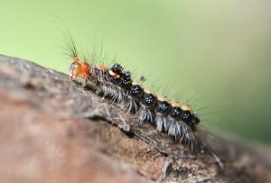 caterpillar-207354_960_720