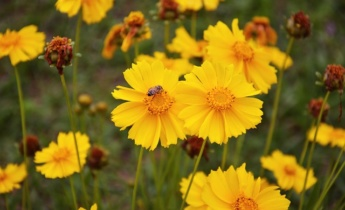 Семена однолетников: Новинки из каталога Весна 2016…