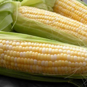 corn-delikatesna-1