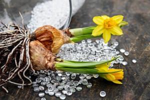 daffodils-2049847_960_720