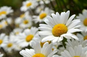 рассада многолетних цветов фото описание смотреть