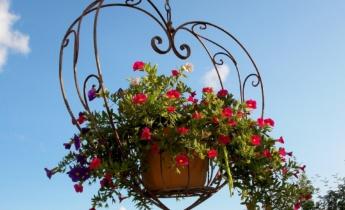 Урок – 13. Растения для балконов и террас