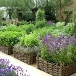 Как создать живую изгородь из душистых трав?
