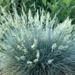 В каком уходе нуждаются декоративные травы весной?