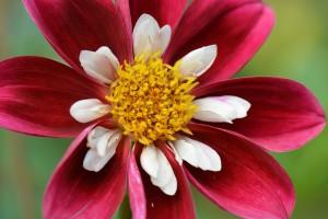 flower-1539320_960_720