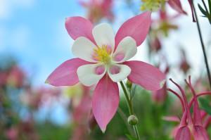 flower-1818770_960_720