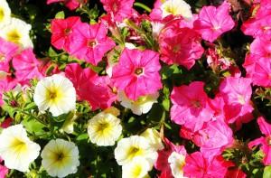 flower-1844235_960_720