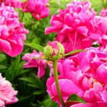 12 хитов прекрасного сада
