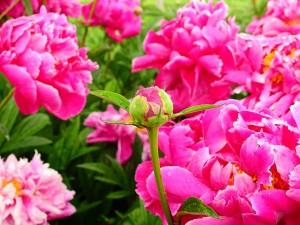 прекрасный сад фото описание смотреть