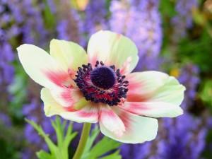 редкие растения фото описание смотреть