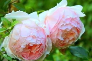 flower-3160175_1280
