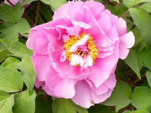 flower-544599_960_720
