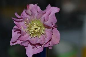 flower-675931_960_720