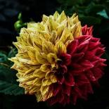 Декоративный сад в вопросах и ответах…
