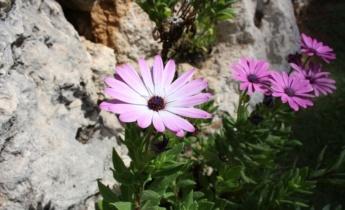 Растения, рекомендуемые для выращивания на каменистой горке