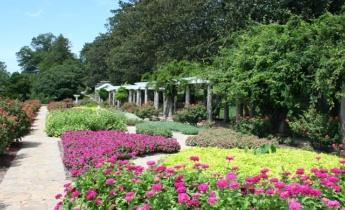 Какие растения выбрать для городскихцветников?