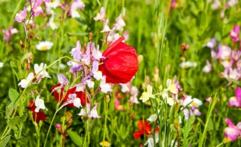 Сад полевых цветов