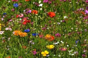 flower-meadow-260301_640