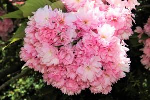 садово-огородные работы май фото описание смотреть