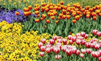 Урок — 9. Весеннецветущие клубни и луковицы в дизайне сада…