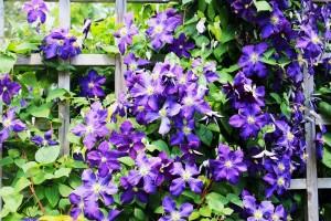 flowers-2212413_1280