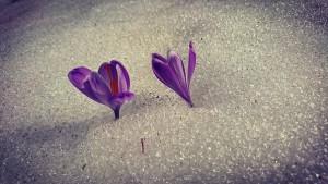 flowers-2235459__340