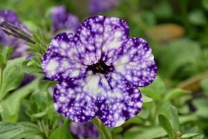 flowers-2714604_1280