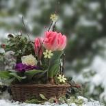 Февраль 2018: садово-огородные работы, которые нужно успеть