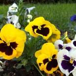 Двулетние растения. Какие они?