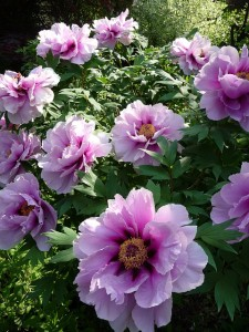 flowers-4669_640