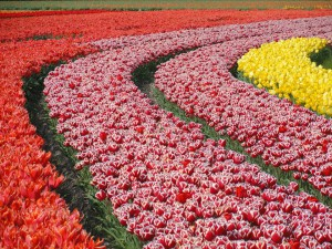 flowers-569648_960_720