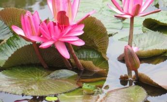 8 вопросов, которые интересуют всех владельцев садовых прудов и водоемов…