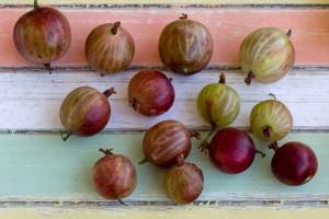 fruits-1533757_1280