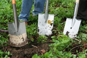 gardening-331986_1280