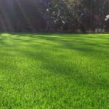 Правила создания газона…