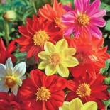 Календарь ухода за цветниками…