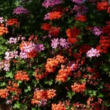 10 красивейших цветов, которые украшали наш сад с июня до  первого снега…