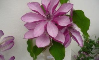 Флориум посетит Plantarium 2013