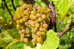 grapes-2715711_960_720